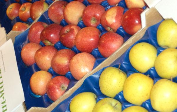 Ekološki uzgojene jabuke iz Slavonije